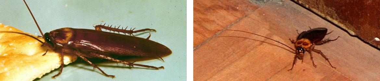 Cucarachas en casas
