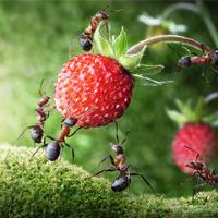 Las Hormigas, una plaga molesta para le hombre