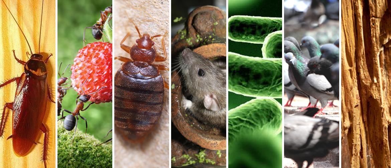 Servicios de desinfección Ecopest